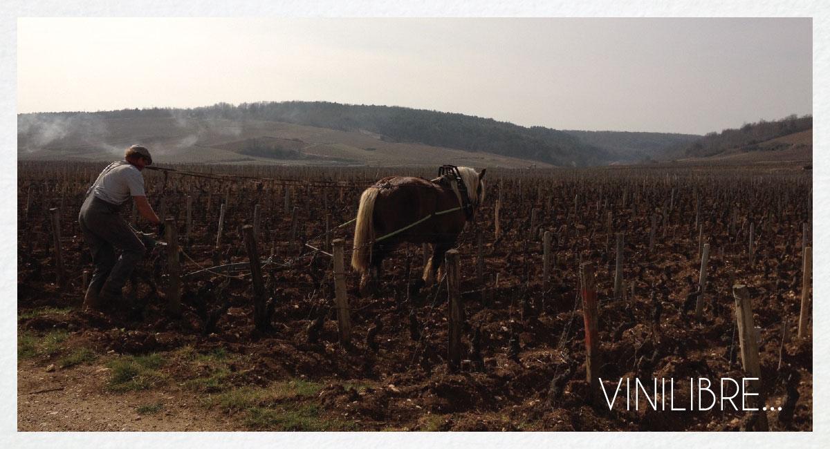 SLIDES-VINILIBRE-AVEC-PHRASE-01